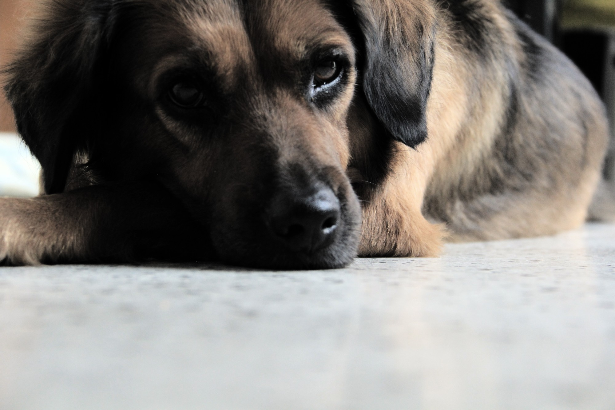 CBD for Dogs: How Natural Healing Pet Care Can Help Your Canine